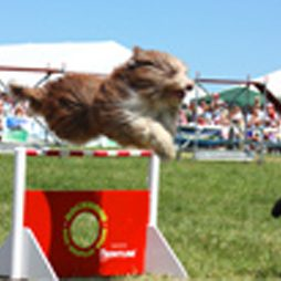 Rockwood Dog Display